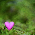 Heart In Moss by Alexandre Fundone