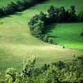 Hedged Farmland by Photo Marylise Doctrinal