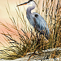 Heron Sunset Print by James Williamson