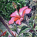 Hibiscus Sketchbook Project Down My Street  by Irina Sztukowski