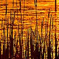 Horicon Cattail Marsh Wisconsin by Steve Gadomski