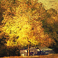 Horse Barn In The Shade by Kathy Jennings
