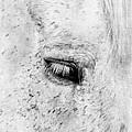 Horse Eye by Darren Fisher