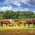 Horses At The Ranch by Elena Elisseeva