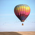 Hot Air Balloon And Birds by Photo by Greg Thow