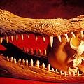 Human Skull  Alligator Skull by Garry Gay