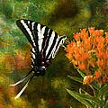 Hungry Little Butterfly by J Larry Walker