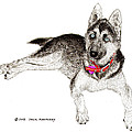 Husky With Blue Eyes And Red Collar by Jack Pumphrey