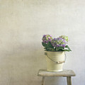 Hydrangea Resting On Stool by Paul Grand Image