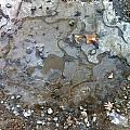 Ice On The Rocks by Elijah Brook