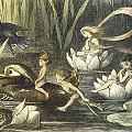 In Fairyland Fairies And Waterlilies by Richard Doyle