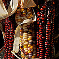 Indian Corn by Susan Herber