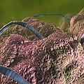 Intestinal Parasites, Artwork by David Mack