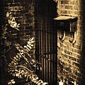Iron Door Sepia by Kelly Hazel