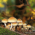 It's a Small World Mushrooms Poster by Jennie Marie Schell