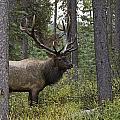 Jasper National Park, Jasper, Alberta by Philippe Widling