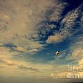 Kite At Folly Beach Near Charleston Sc by Susanne Van Hulst