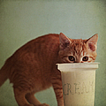 Kitten Eating From Big Pot Of  Cream by By Julie Mcinnes