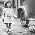 Kitten On Lead by Fox Photos