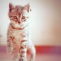 Kitten Walking On Floor by Alberto Cassani