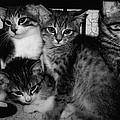Kittens Corner by Christy Leigh