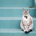 Kitty On Blue Steps by Lauren Rosenbaum