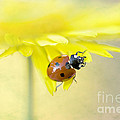 Lady In Yellow by Jacky Parker