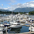 Large Marina In Vancouver Bc Canada. by Gino Rigucci