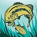 largemouth bass preying on perch fish Print by Aloysius Patrimonio