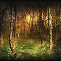 Last Rays by Svetlana Sewell