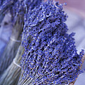 Lavender Bunches In Provence by Paul Grand