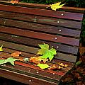 Leafs In Bench by Carlos Caetano