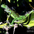 Leapin Lizards by Karen Wiles