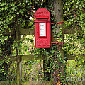 Letterbox In A Hedge by Louise Heusinkveld