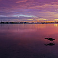 Life After Sunset by Melanie Viola