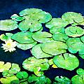 Lily Pads And Lotus by Tammy Wetzel