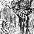 Lincoln Cartoon, 1862 by Granger