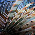 Lion Fish Fins Print by Carol Groenen