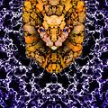 Lion's Roar by Christopher Gaston