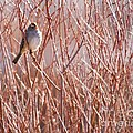 Little Sparrow by Sabrina L Ryan