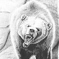 Ljuti Medved