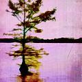 Lone Cypress by Judi Bagwell