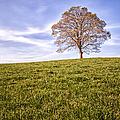 Lone Tree On The Hill Colour by John Farnan
