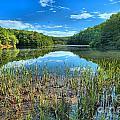 Long Branch Marsh by Adam Jewell