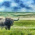 Longhorn Prarie by Jeff Kolker