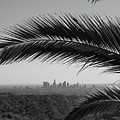 Los Angeles Skyline From Hollywood Hills by Mike Shaffer