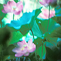 Lotus--ethereal Impressions II 20a1 by Gerry Gantt
