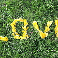 Love Spelt Out With Flowers by G Fletcher