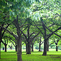 Low Trees In Flushing Meadows-corona Park by Ryan McVay