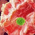 Macrophage Engulfing Pathogen, Artwork by David Mack